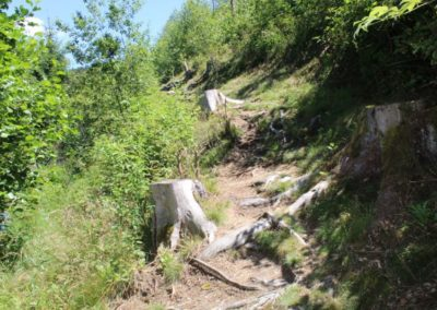 Pfotentour Regensee mit Flusswanderweg