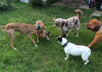 Urlaub mit Hund in Zwiesel