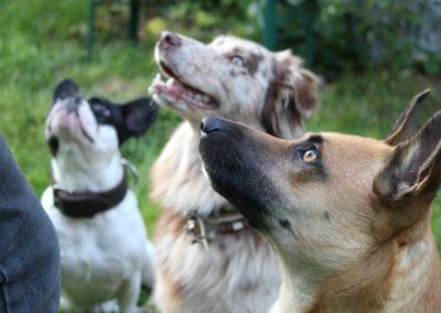 """Unsere """"Fellosophie"""" - Pension Sonnleitn Zwiesel - Urlaub mit Hund"""