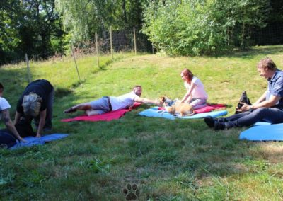Massage für den Hund - Entspannung pur - Pension Sonnleitn Zwiesel