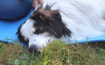 Massage für den Hund – Entspannung pur