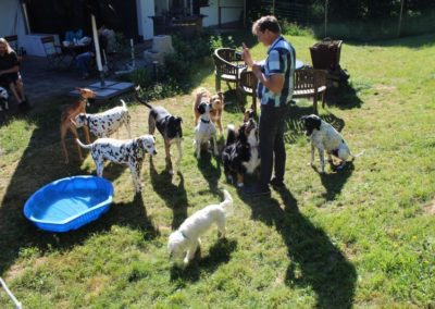 Ihre Pension Ihre Pension im Bayrischem Wald - Urlaub mit Hund