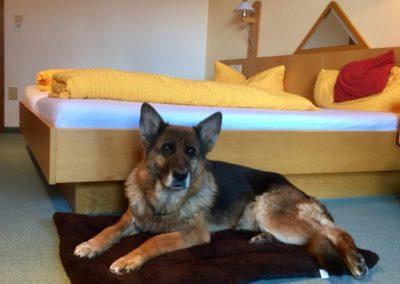 Ihre Pension in Zwiesel - Urlaub mit Hund
