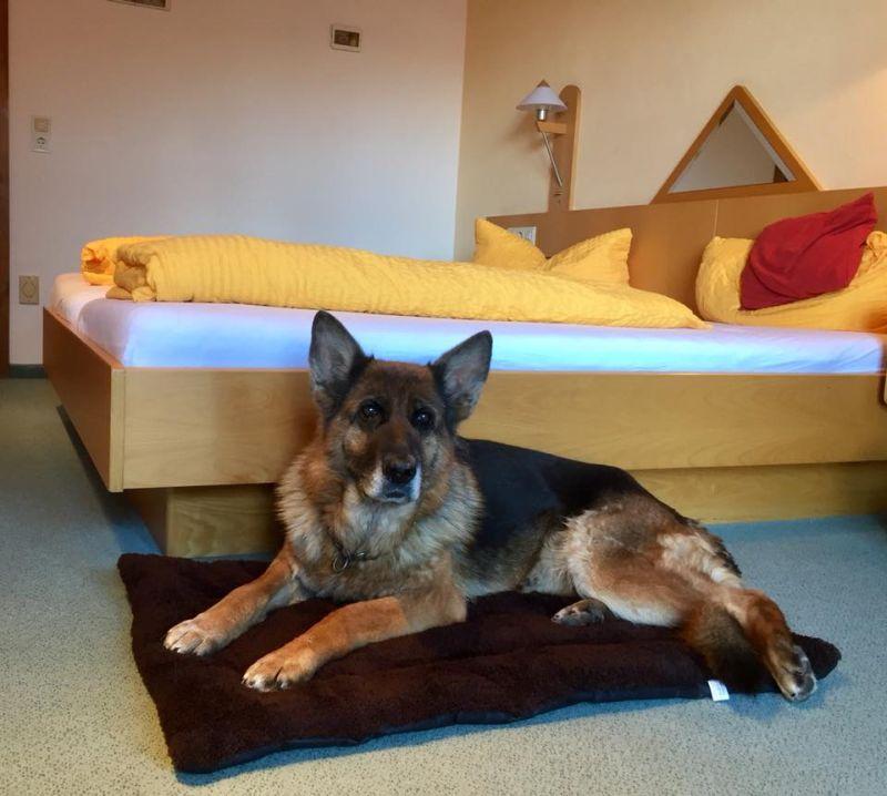 Urlaub Mit Hund Eingezäunter Garten: Urlaub Mit Hund In Zwiesel
