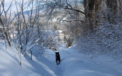 Last Minute Winterurlaub mit Hund zum Sparpreis