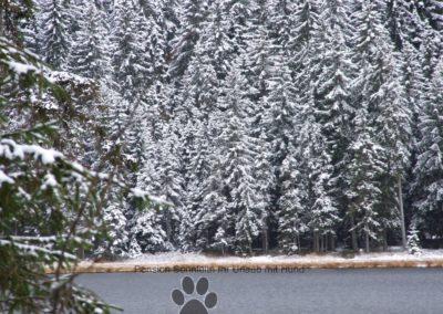 Arbersee beim 1 Schnee am 7.11.2016 010