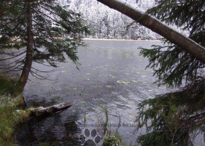 Arbersee beim 1 Schnee im Bayrischem Wald
