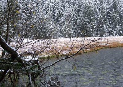 Arbersee beim 1 Schnee am 7.11.2016 014