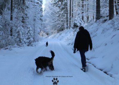 Bayrischer Wald Urlaub mit Hund