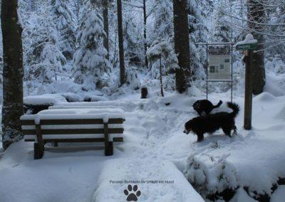 Urlaub mit Hund im Bayrischem Wald