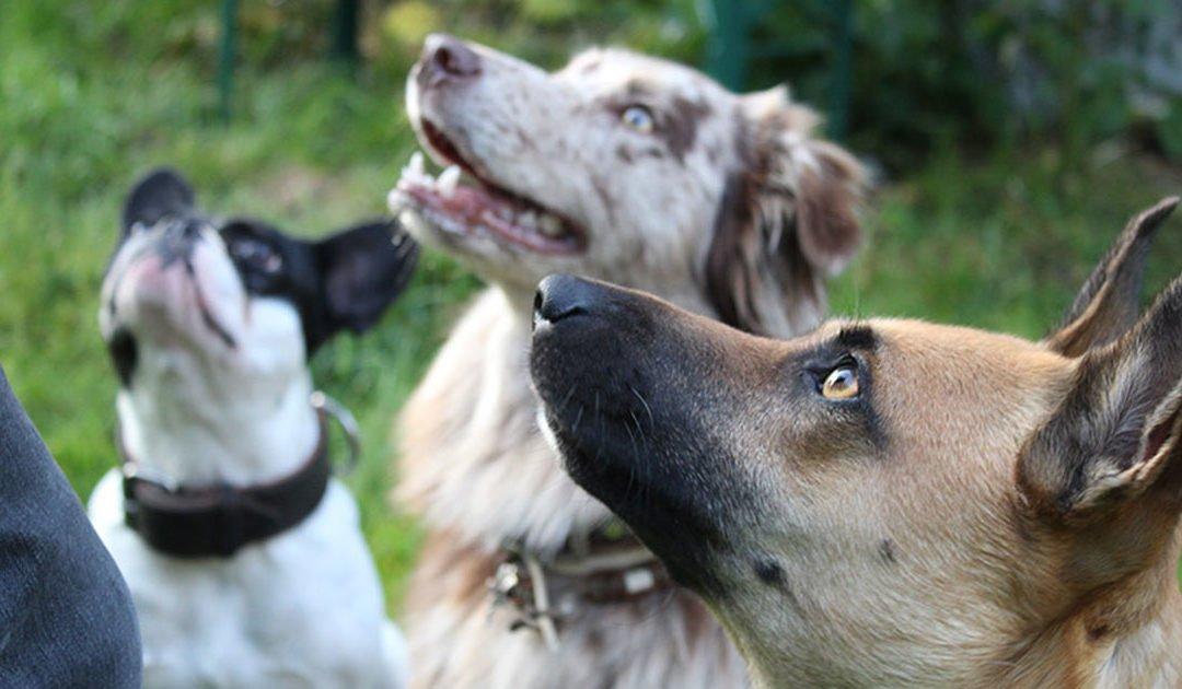 7 Tage Hundeglück