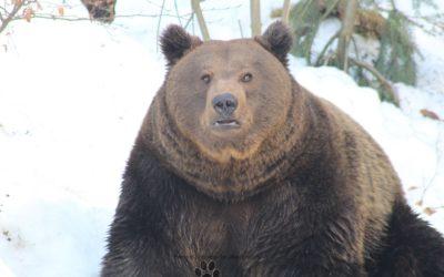 Pfotentour Tierfreigelände Neuschönau