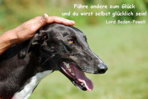 Workshop Hundeglück vom 31.10.2021 bis 06.11.2021